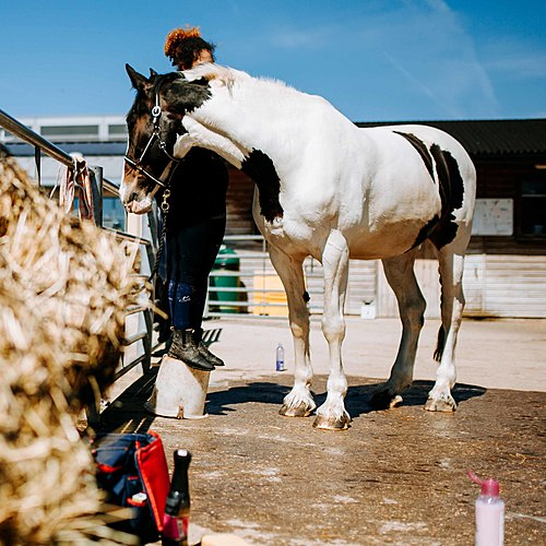 Student Blog - Sarah Hindle, City and Guilds Level 3 Equine Management