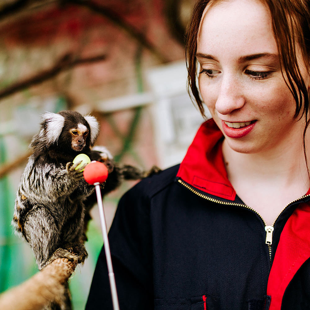 Student on animal course at University Centre Bishop Burton target training a marmoset