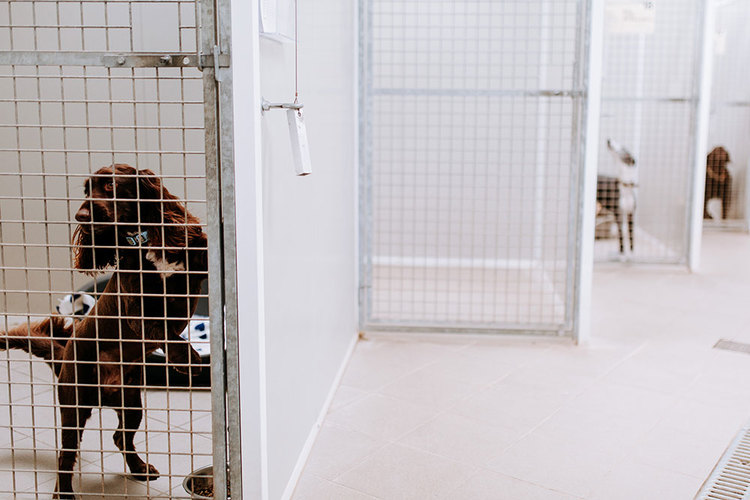 Dogs in indoor kennels